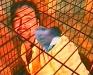Tejal Shah Chingari Chumma (Stinging Kiss), 2000. Video still, 8:30 min, ed. of 5.