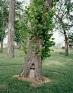 Nandita Raman: Tree, 2011. Archival inkjet print mounted behind Plexi mirror, edition of 3 (+1 AP),