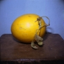 PAT Untitled (Fruit Color, 1), 2007. C-print, 9 x 9 in (image size), ed. of 7.